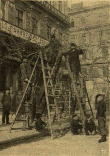 Fanyesés - 1905
