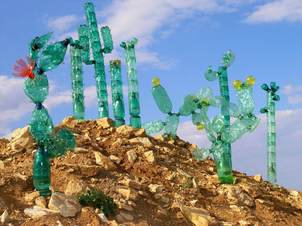 PET palack kaktuszok