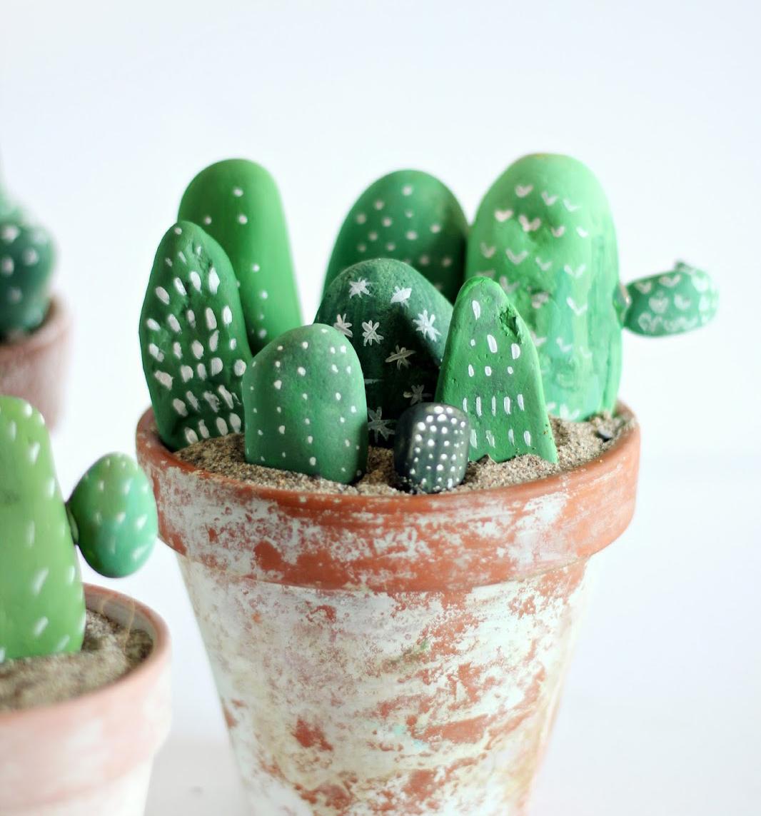 kaktuszok kavicsból